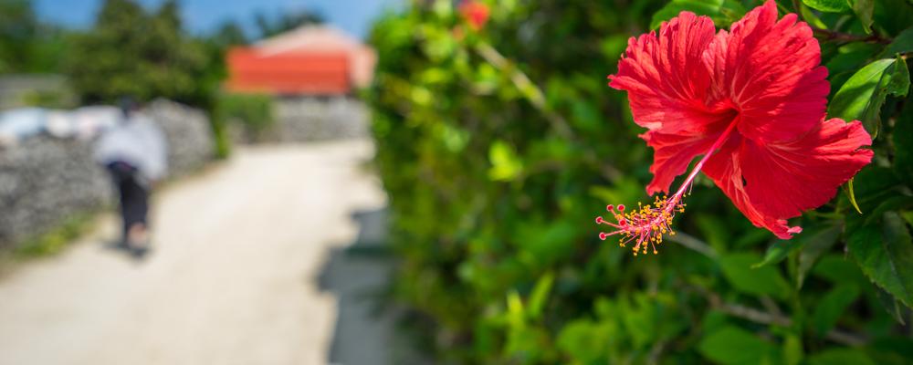 石垣島の冬を満喫! 冬ならではの楽しみ方とは?
